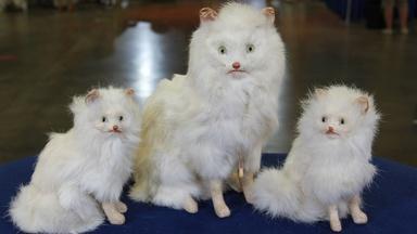 Web Appraisal: German Cat Family, ca. 1905