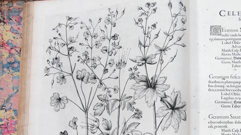 "Antiques Roadshow -- S15 Ep6: Appraisal: 1613 Basilius Besler ""Hortus Eystettensi"