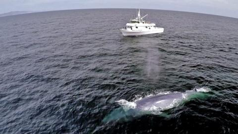 Big Blue Live -- A Blue Whale's Perfect Comic Timing