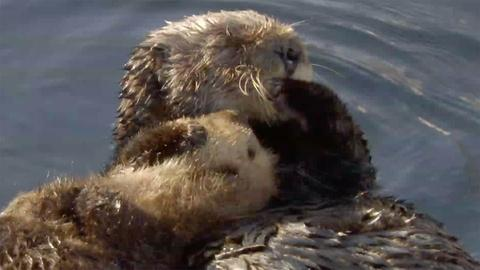 Big Blue Live --  Fan Favorite: The Otter
