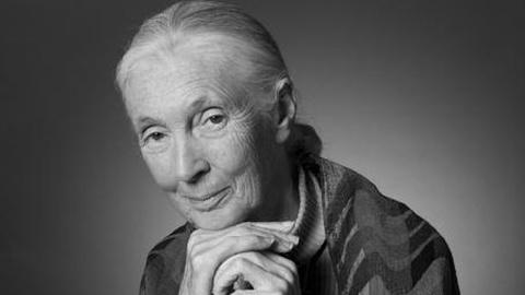The Journal: Jane Goodall