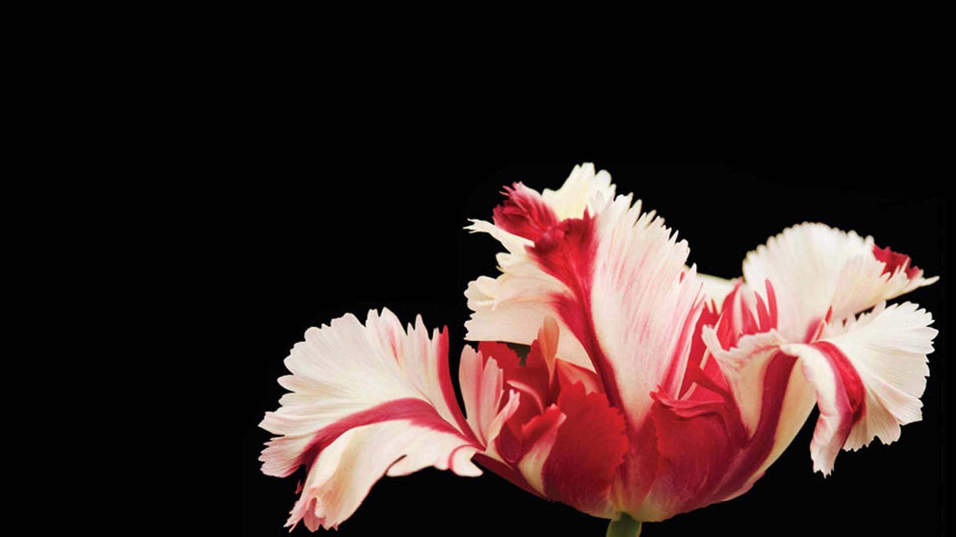 Full-Length Program | Botany of Desire | PBS