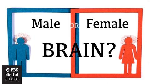BrainCraft -- Are Male and Female Brains Different?