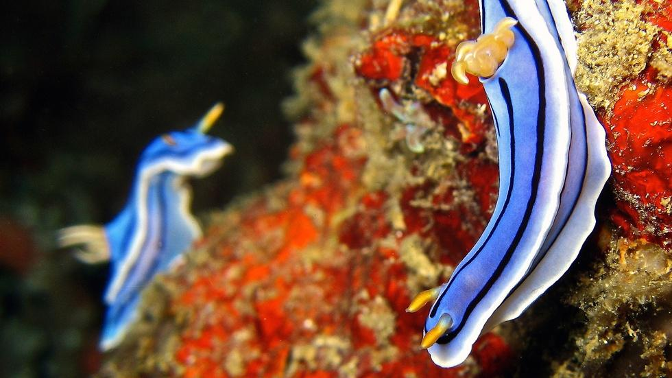 The Weird World of Animal Mating image