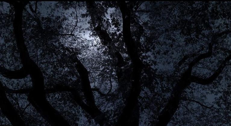 Central Park Five: Official Trailer