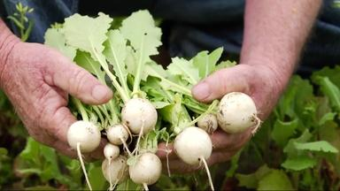 Turnips: The Roots