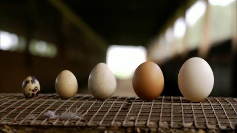 A Chef's Life -- Eggs A Dozen Ways