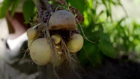 Preview: Season 3, Ep. 13: One Potato, New Potato