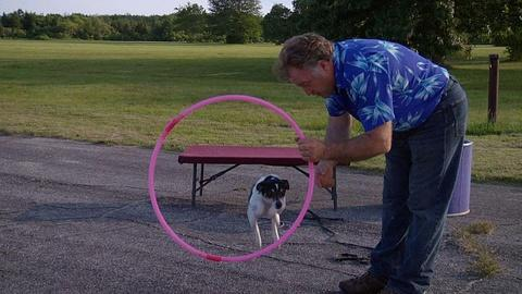 Circus DIY: How to Train a Dog at Home