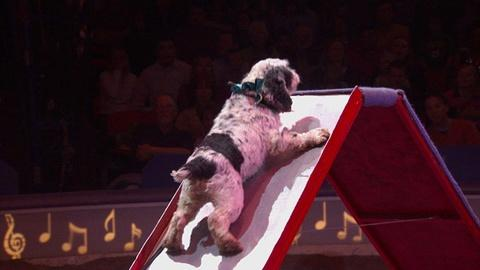 Circus Physics: Newton's Laws of Motion