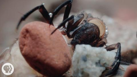 Deep Look -- S3 Ep8: The Amazing Underwater Tape of the Caddisfly