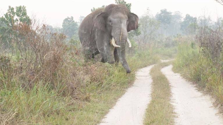 EARTH A New Wild: Human and Elephant Conflict in Sumatra