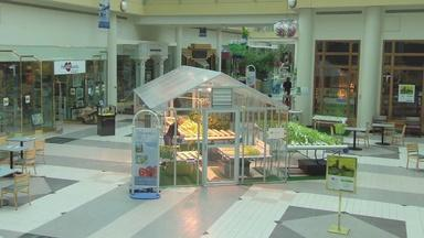 Grow Food in the Galleria Mall