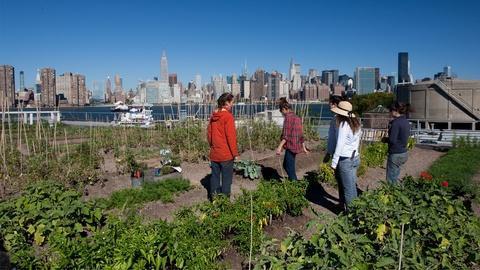 Food Forward -- Pilot Episode: Urban Farming
