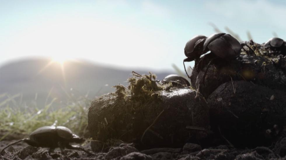 Dung Beetles on a Spinning Planet image