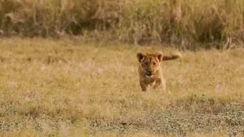 S1 E1: Every Lion Counts