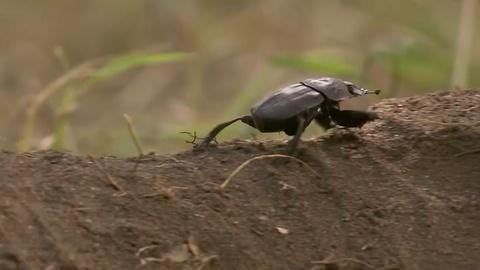 Gorongosa Park -- Delicious, Nutritious … Poop