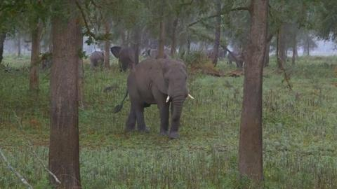 Gorongosa Park -- Elephants Don't Forget, But They Can Forgive