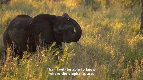 Gorongosa Park -- Facing Fears of Elephants