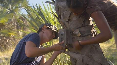 Gorongosa Park -- Trail Cameras & Collars Help Scientists Restore Wildlife