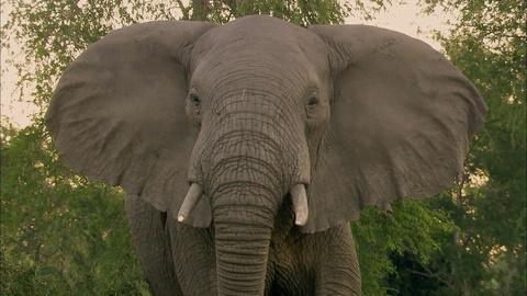 Gorongosa Park -- Episode 2 | Elephant Whisperer