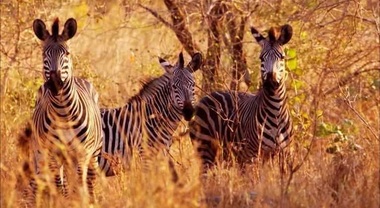 Gorongosa Park: GORONGOSA PARK Rebirth of Paradise | Preview