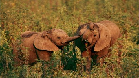 S1 E2: Preview   Episode 2   Elephant Whisperer