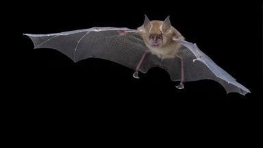 Bat and Cricket Echolocation Calls