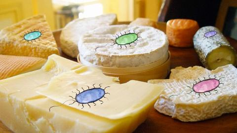 Gross Science -- What Lives In Cheese?