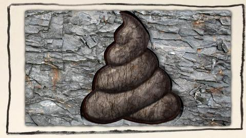Gross Science -- What Can You Learn From Ancient Poop?