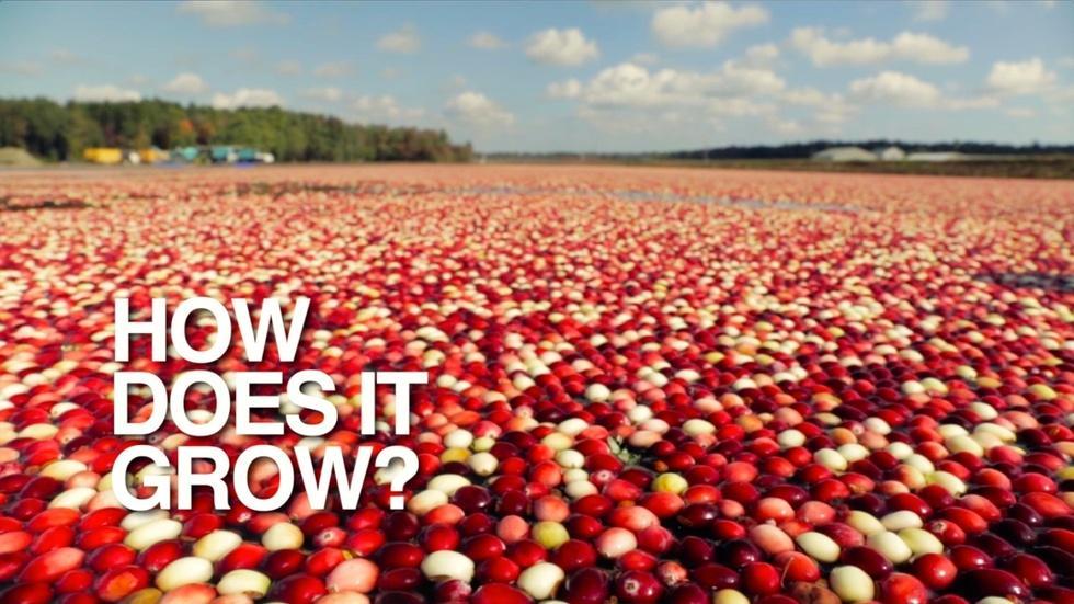 Cranberries image