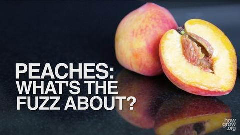 How Does It Grow -- PEACHES: What's the Fuzz About?