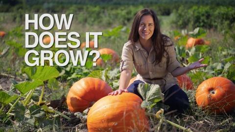 How Does It Grow -- Pumpkin