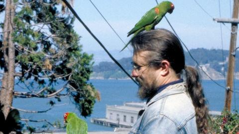 Independent Lens -- S8: The Wild Parrots of Telegraph Hill - Trailer