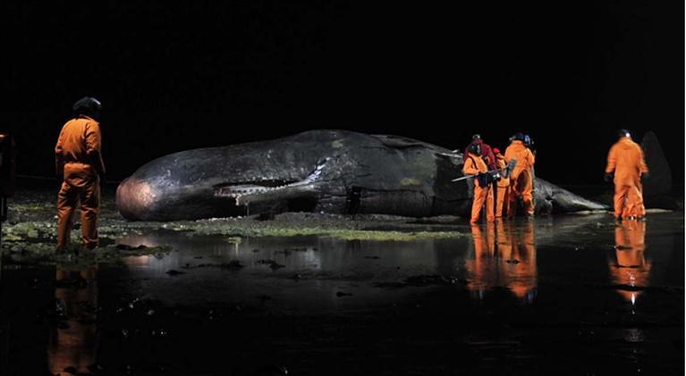 Inside Nature's Giants: Sperm Whale