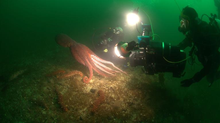 Inside Nature's Giants: Preview | Giant Squid