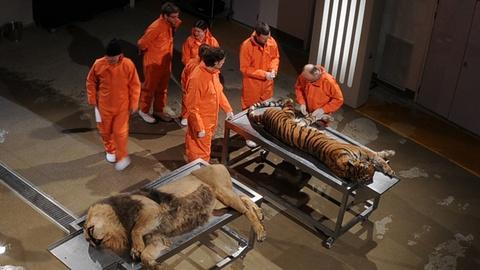 S1 E4: Big Cats
