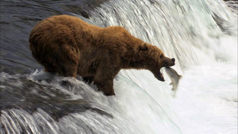 Katmai: Alaska's Wild Peninsula: Extended Trailer
