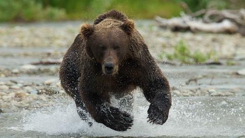 Katmai: Alaska's Wild Peninsula -- Official Trailer
