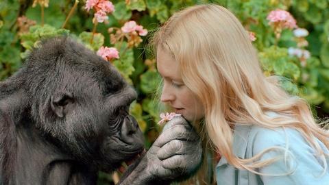 Koko - The Gorilla Who Talks -- Official Trailer