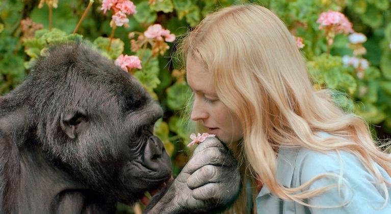 Koko - The Gorilla Who Talks: Trailer