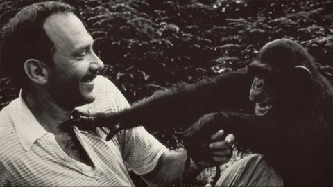 Koko - The Gorilla Who Talks -- Facing Critics