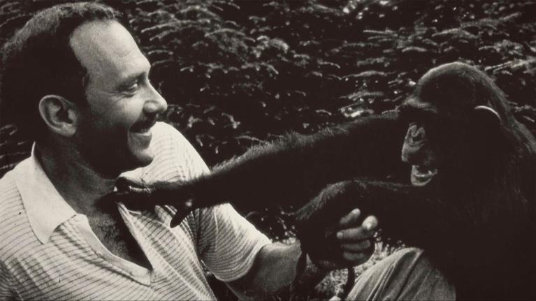 Koko - The Gorilla Who Talks: Facing Critics