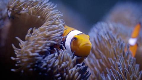 Life on the Reef -- Can Fish Talk?