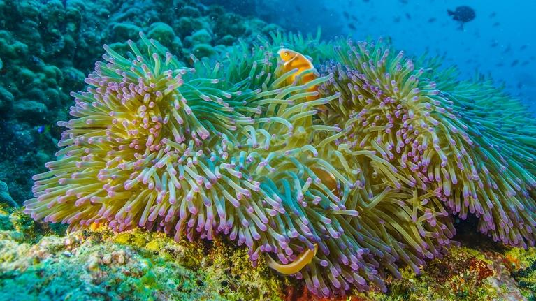 Life on the Reef: A Timelapse of the Reef