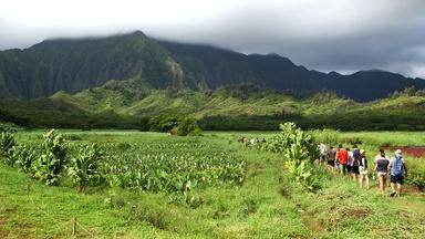 Hawai'i: K?ko?o ??iwi's taro farm