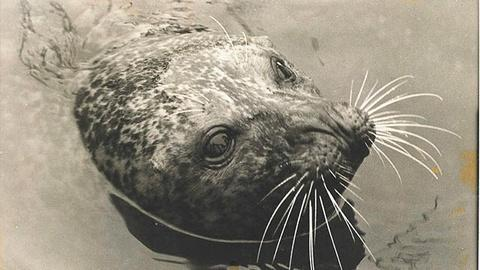 My Wild Affair -- The Seal Who Came Home