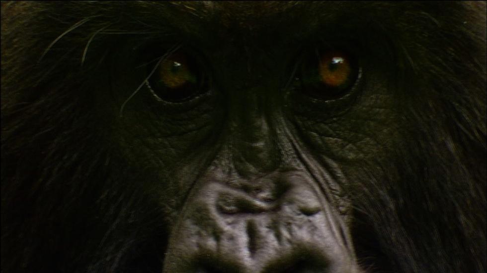 Gorilla Love Games image