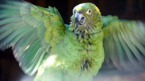Nature -- Parrot Confidential