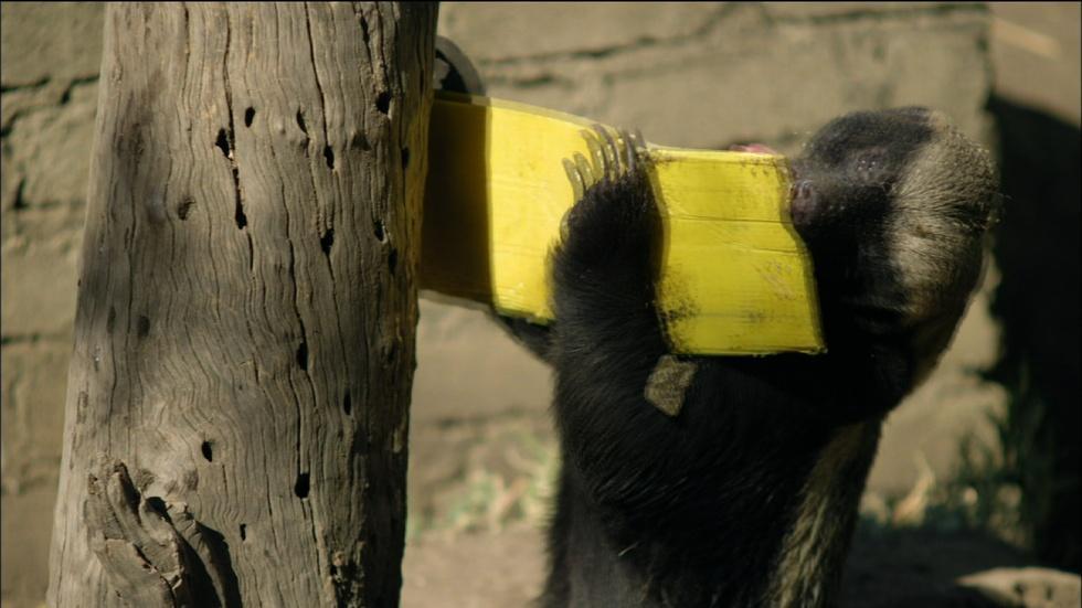 Honey Badger vs. Bee Hive image